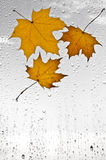 Colorful autumn leaves and raindrops on the window Stock Photos