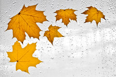 Colorful autumn leaves and raindrops on the window Royalty Free Stock Photography