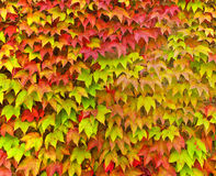 Colorful Autumn Leaves, Ravello, Italy royalty free stock photography