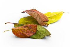 Colorful autumn leaves, red, yellow, green Stock Images