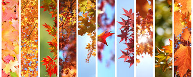 Colorful autumn leaves set Royalty Free Stock Images