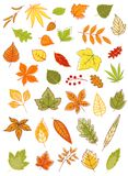 Colorful autumn leaves set Stock Images
