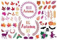Colorful autumn leaves, set of vector design elements Vector Illustration