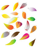 Colorful autumn leaves set on white Royalty Free Stock Images