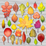 Colorful autumn leaves set on wooden background vector Stock Images
