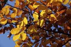Colorful autumn leaves Royalty Free Stock Images