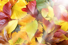 Colorful autumn leaves and sun beams Stock Photo