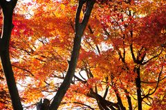 Colorful Autumn Leaves with Sunlight Stock Photo