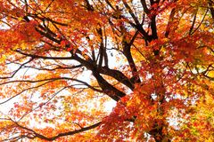 Colorful Autumn Leaves with Sunlight Stock Image