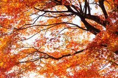 Colorful Autumn Leaves with Sunlight Stock Images
