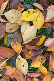 Colorful Autumn Leaves Royalty Free Stock Image