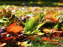 Colorful autumn leaves in sunny park Stock Images