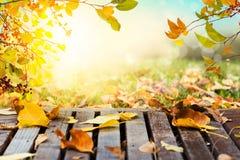 Colorful autumn leaves sunset background Stock Image