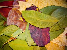 Colorful Autumn Leaves Texture Background Royalty Free Stock Photos