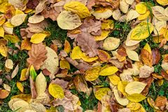 Colorful Autumn Leaves Texture Background royalty free stock image