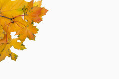 Colorful autumn leaves. Colorful leaves on top right corner Royalty Free Stock Photo