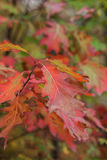 Colorful autumn leaves Stock Photos