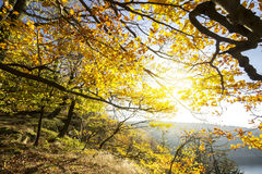 Colorful Autumn Leaves on Tree Branches. Wide Angle Fall Background. Beautiful Golden Colors Scene stock images