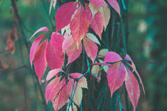 Colorful autumn leaves on a tree close up Stock Photos