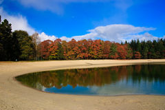 Colorful autumn leaves on trees. In a forest with a lake Royalty Free Stock Photography
