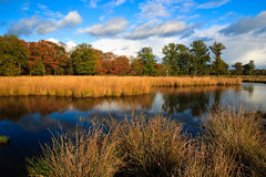 Colorful autumn leaves on trees. In the wetlands Stock Photography