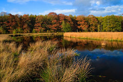 Colorful autumn leaves on trees. In the wetlands Stock Images