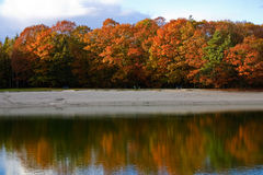 Colorful autumn leaves on trees. In a forest with a lake Stock Images