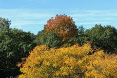 Colorful Autumn Leaves and Trees-Fall Foliage Stock Photo