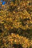 Colorful autumn leaves of the trees Stock Image