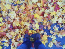 Colorful autumn leaves underfoot, autumn.  Stock Image