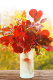 Colorful autumn leaves in a vase Stock Photography