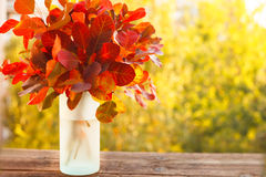 Colorful autumn leaves in a vase Royalty Free Stock Images