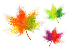Colorful autumn leaves, vector set. Colorful autumn leaves with particles, vector set over white background Stock Images