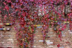 Colorful autumn leaves wall macro texture stock images