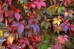 Colorful autumn leaves wall macro texture Stock Image