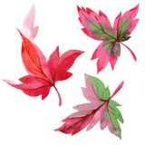 Colorful watercolor autumn leaves. Leaf plant botanical garden floral foliage. Isolated illustration element. vector illustration