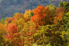 Colorful autumn leaves in West Virginia royalty free stock image
