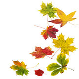 Colorful autumn leaves on white background, composition Stock Images