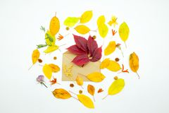colorful autumn leaves on white background with envelope and flowers. Colorful autumn leaves on white background with kraft envelope red and orange leaf Stock Photography