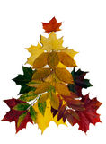 Colorful autumn leaves on white background. Royalty Free Stock Image