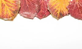 Colorful autumn leaves on white background, space for text royalty free stock photo