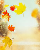 Colorful autumn leaves on window with rain drops at autumn nature Royalty Free Stock Photography