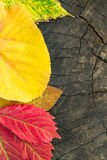 Colorful autumn leaves on wood background Stock Photography