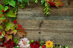Colorful autumn leaves wood background. Colorful autumn leaves Flower and berries on a wooden background Royalty Free Stock Image