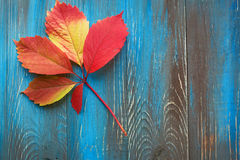 Colorful autumn leaves on wooden background Royalty Free Stock Image