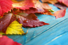 Colorful autumn leaves on wooden background Stock Image