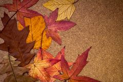 Colorful autumn leaves on wooden background Royalty Free Stock Images