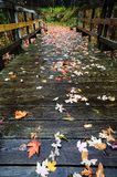 Colorful Autumn Leaves on a Wooden Foot Bridge Royalty Free Stock Photo