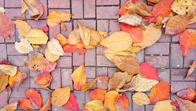 Colorful of autumn. Many leaves fallen from the tree to the ground in autumn royalty free stock photos