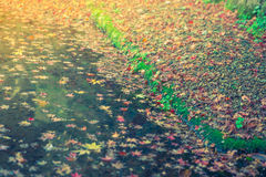 Colorful  Autumn maple leaf on the water ( Filtered image proces Royalty Free Stock Images